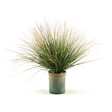 Onion Grass with Tips Floor Plant in Pot