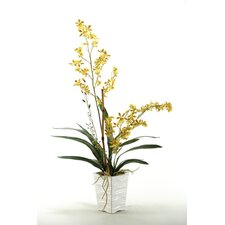 Orchids with Orchid Foliage and Bamboo Stalk