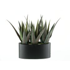 <strong>D & W Silks</strong> Striped Agave Floor Plant in Planter