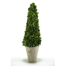 Preserved Boxwood Cone Topiary in Planter