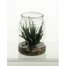 Agave Plant in Candle Jar