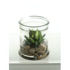 Small Agave Plant Succulent in Candle Jar
