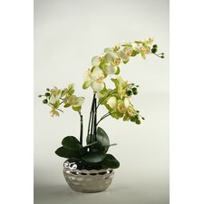 <strong>D & W Silks</strong> Phalaenopsis Orchid in Mirrored Planter