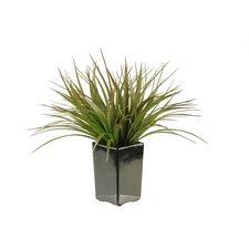 Grass in Square Ceramic Planter