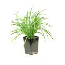 Yucca Grass in Square Ceramic Planter