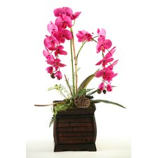 Phalaenopsis Orchids in Rectangle Wooden Planter