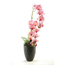 Phalaenopsis Orchids in Ceramic Vase