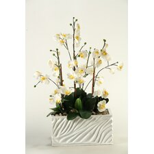 Phalaenopsis Orchids with Foliage in Resin Rectangle Planter