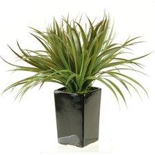 Moss Grass in Tall Square Ceramic Planter