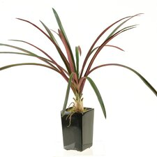 Areca Grass in Square Ceramic Planter