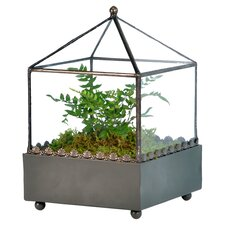 Ball Top Square Terrarium