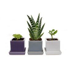 Cube and Saucer Mix Vase (Set of 3)