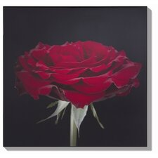 Crimson Kiss Photographic Print