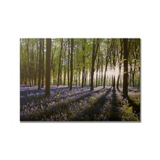 "<strong>Graham & Brown</strong> Bluebell Landscape Printed Canvas Art - 30"" X 40"""