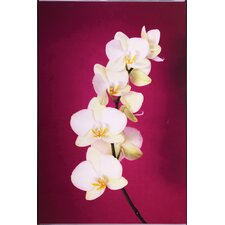 <strong>Graham & Brown</strong> Fucshia Orchid Lacquer Art