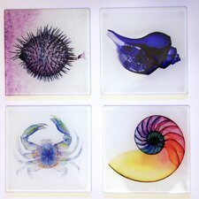 X-ray Designs 4 Piece Nautical Frosted Glass Coasters Set