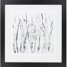 Birches II by Vision Studio Framed Graphic Art