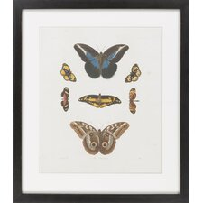 Knorr Butterflies I by Vision Studio Framed Graphic Art