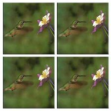 Tuftop Hummingbird and Columbine Coasters (Set of 4)