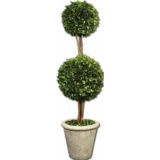 Preserved Boxwood 2 Sphere Topiary in Planter