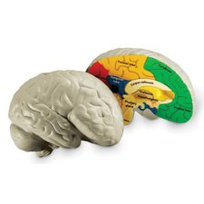 <strong>Learning Resources</strong> Cross-section Human Brain Model