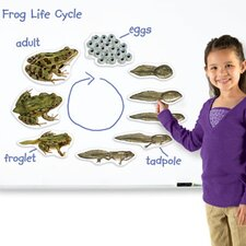 Giant Magnetic Frog Life Cycle 9 Piece Set