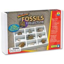 GeoSafari Fossils