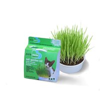 Cat Oat Garden Kit