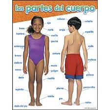 Chart Las Partes Del Cuerpo