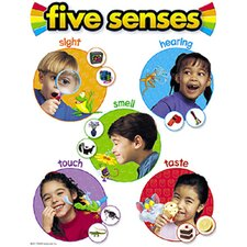Chart Five Senses 17 X 22 Gr pk-2