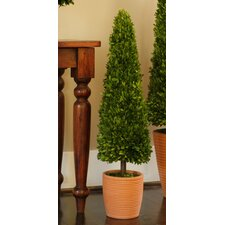 Preserved Boxwoods Cone Topiary in Pot