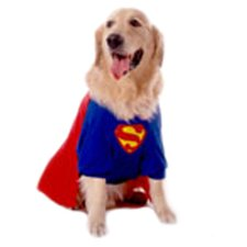 Superdog Dog Costume