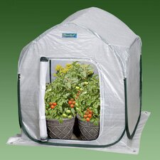 "2.5"" H x 2.0' W x 2.0' D PlantHouse Polyethylene Mini Greenhouse"