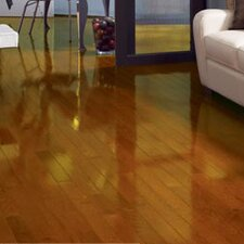 "Color Strip 3-1/4"" Solid Red Oak Flooring in Butterscotch High Gloss"