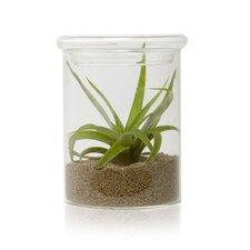 Terrarium Bowl Vase (Set of 2)