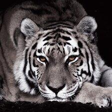 "Glasbild ""Tigra Negra"""
