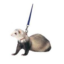 Harness / Lead Set for Ferret