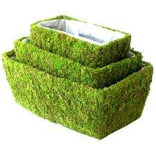 Shasta Moss Basket (Set of 3)