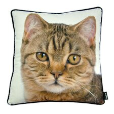 <strong>lava</strong> British Cat Pillow