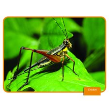 Science Reading Comp Cards Insects