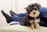 Puppy Proofing Made Simple (Sponsored)