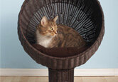 Top 10 Cat Beds
