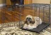A Guide to Crate Training Your Dog