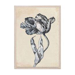 Sieger Tulip I