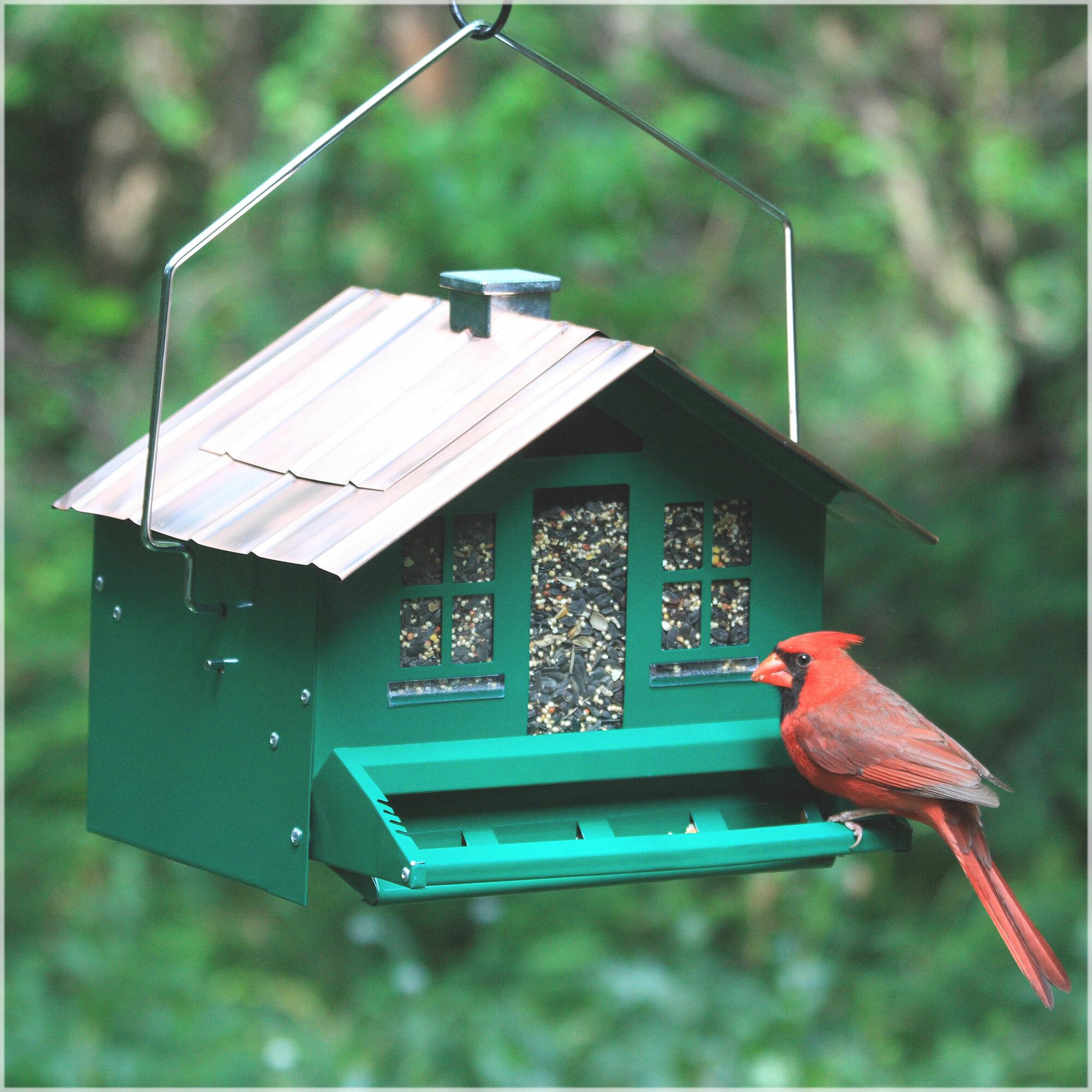garden suet backyard proof products for birds feeder bird throwing squirrel